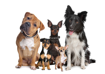 Hunde mit gesundem Fell