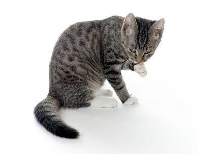 Mittel gegen haarausfall bei katzen