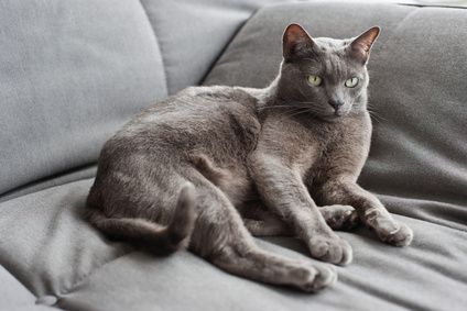 Katze mit gesund glänzendem Fell