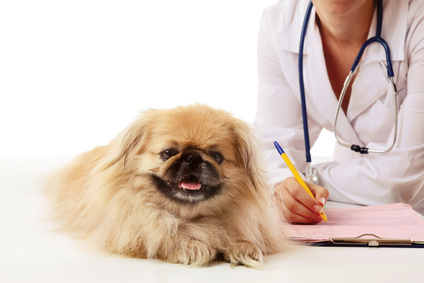 Fragen Sie Ihren Tierarzt