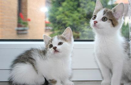 Katzen mit gesundem Fell