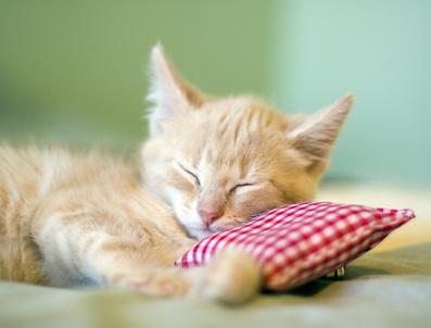 Kleines gesundes Kätzchen