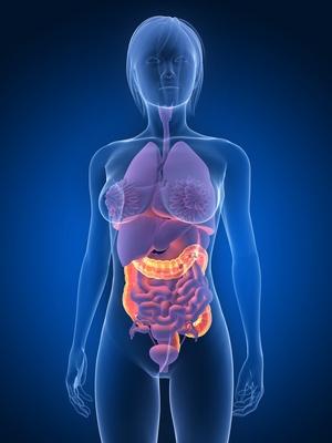 Weibliche Anatomie mit markiertem Darm